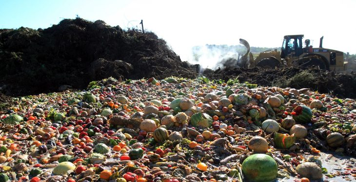 £1.15 million of Government funding announced to tackle food waste problem