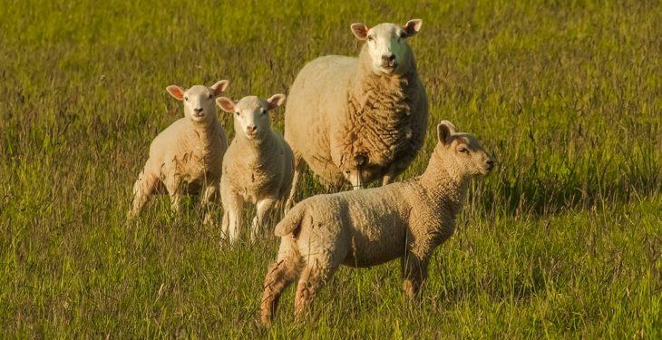 NFU Cymru to host red meat summit
