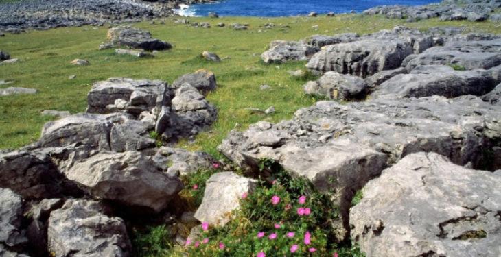 Nature organisation blames CAP for 'biodiversity decline'