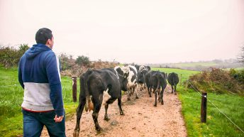 Call for farmers to take part in industry labour survey