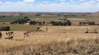 Dairy farming in a volcanic valley and exporting to China: Heather reports from Australia