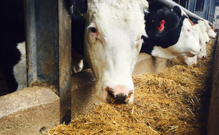 NFU: Government must commit to keep Britain's food self-sufficiency above 61%