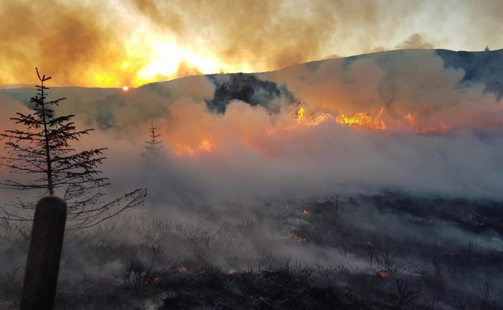 Majority of NI's 2,200 gorse fires 'started deliberately'