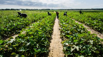 NFU raises 'serious concerns' over new UK immigration policy