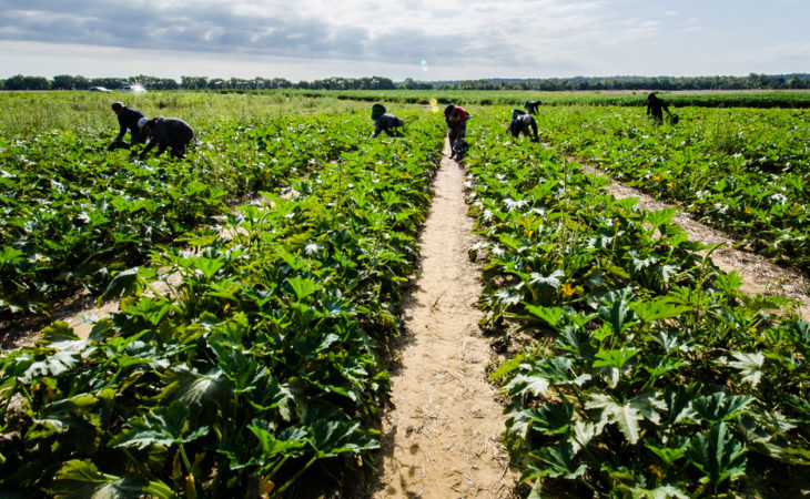 CLA: Migration recommendations don't go far enough for agri-food