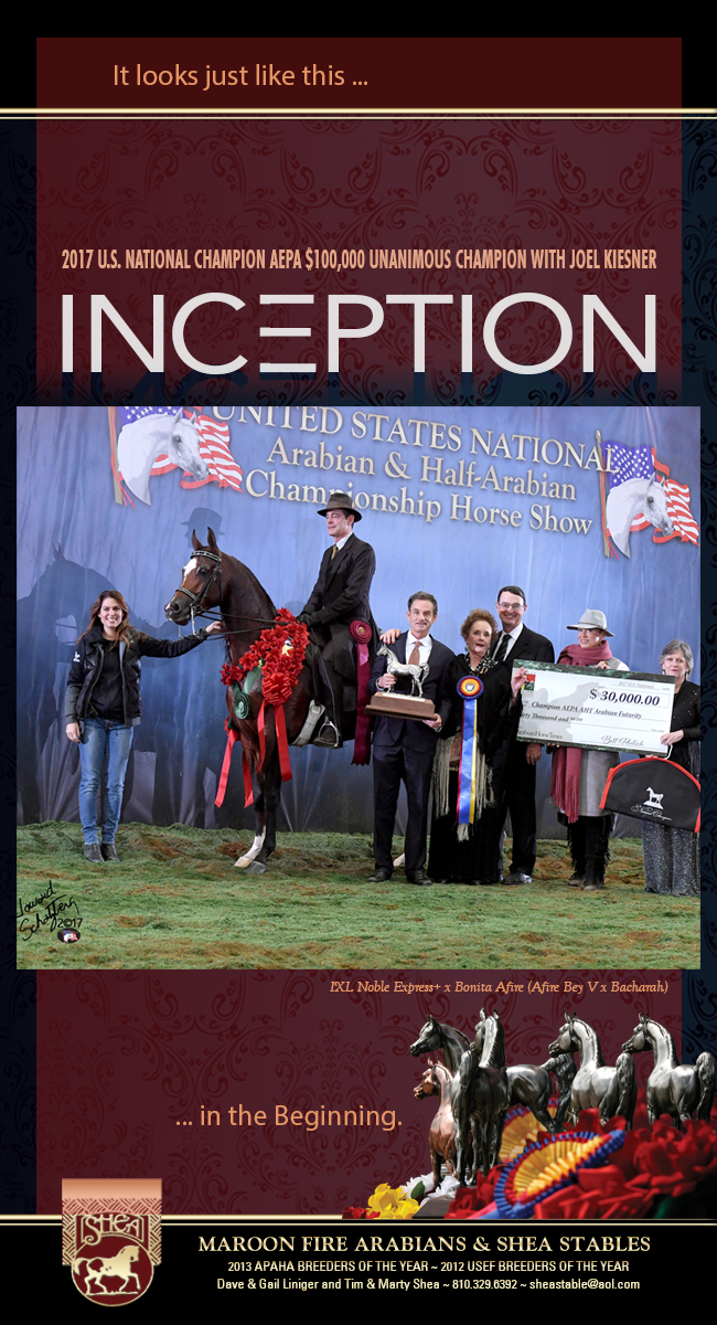 A New Beginning For Maroon Fire Arabians And Shea Stables!