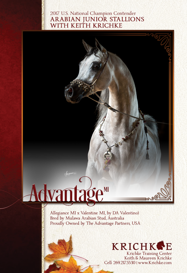 It's time to take Advantage MI - Arabian Junior Stallions with Keith Krichke