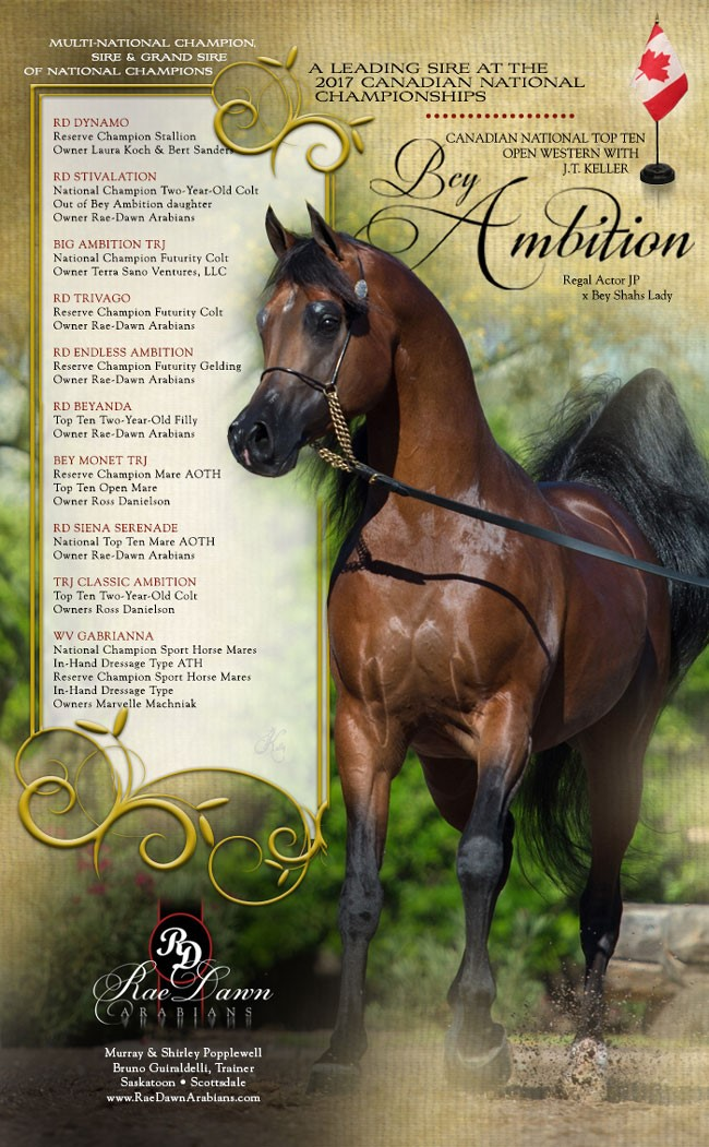 Bey Ambition ... A Leading Sire At Canadian Nationals