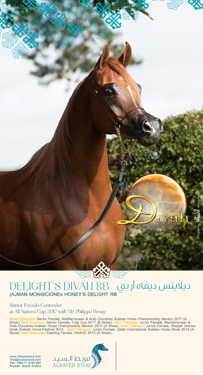 DELIGHTS DIVAH RB ... All Nations Cup Contender