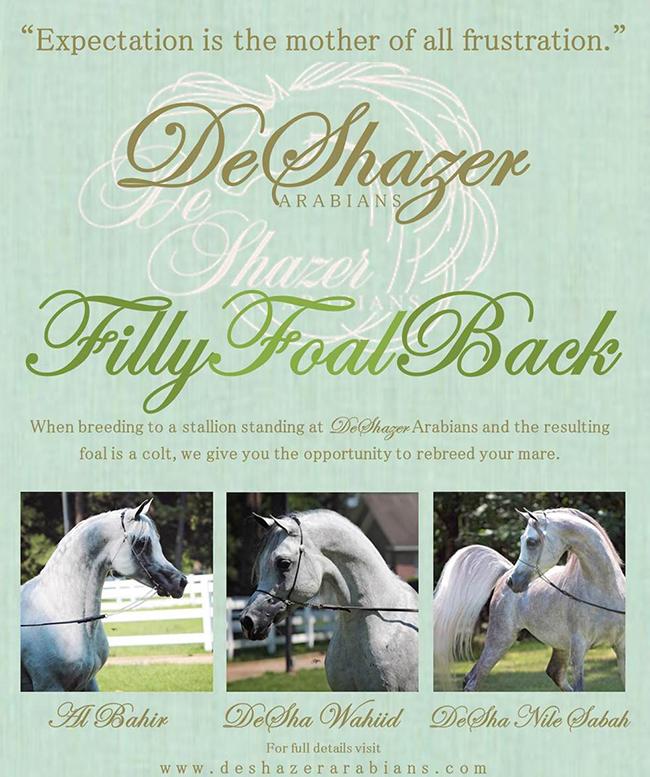 DeShazer Arabians Announces Its Filly Foal Back Program