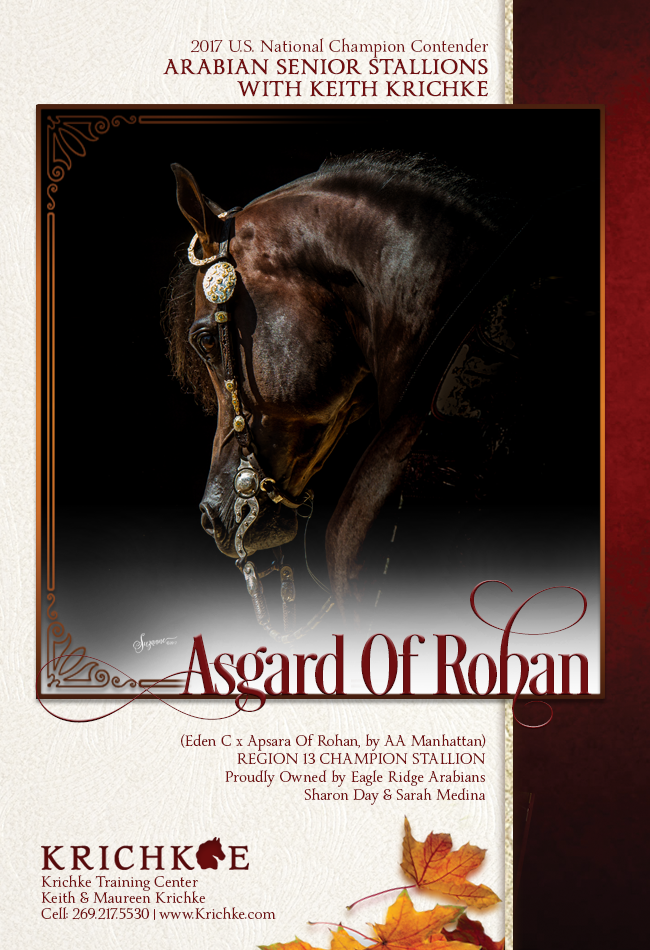The Captivating Asgard of Rohan takes on the Senior Stallion Championship - Tomorrow Night