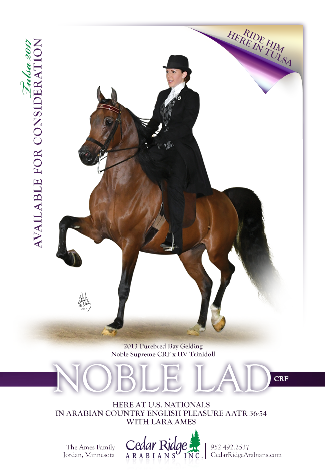 Noble Lad For Sale