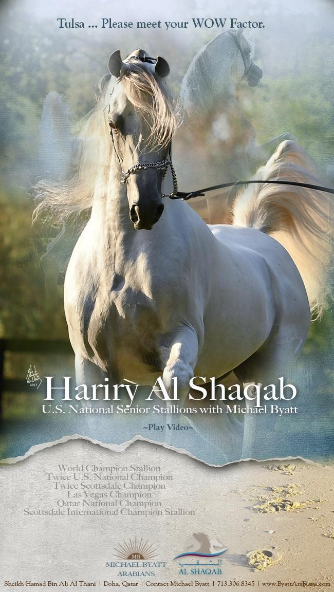Hariry Al Shaqab brings WOW factor to Tulsa!
