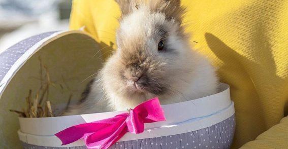 Kaninen Petra