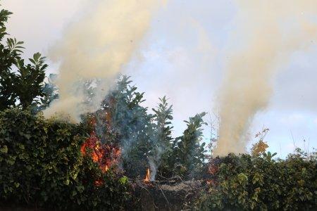 Heg in de brand Teylingerdreef Voorhout