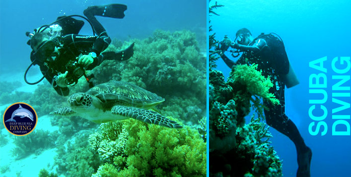 Beach Scuba Dive with all Equipment