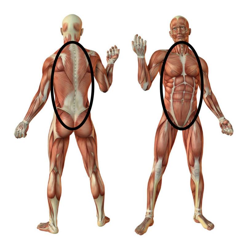 core træning for dig med rygproblemer