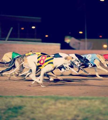 Dublin - Hen Party Packages - Night at the Dogs