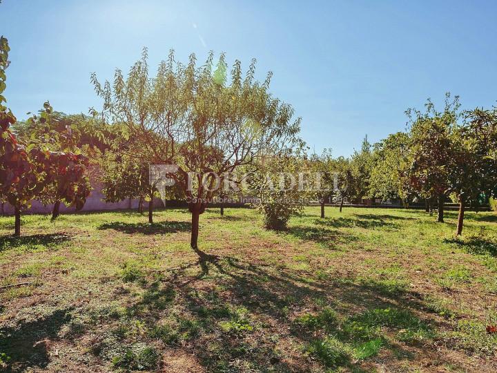 Casa con terreno anexo con árboles frutales, en la comarca de La Selva. Girona.  69