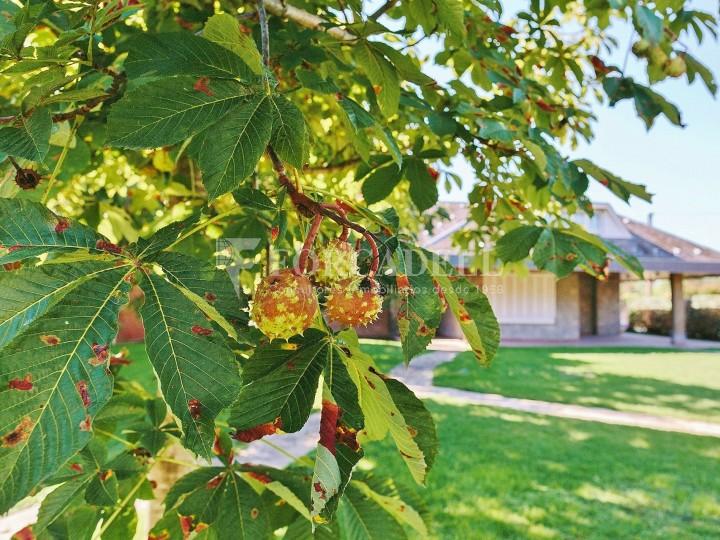 Casa con terreno anexo con árboles frutales, en la comarca de La Selva. Girona.  61