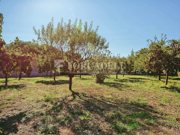 Casa amb terreny annex amb arbres fruiters, a la comarca de La Selva. Girona.  69
