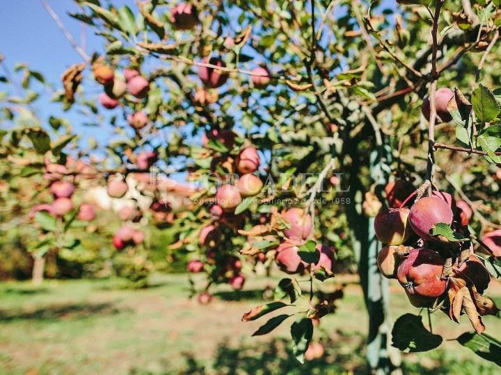 Casa con terreno anexo con árboles frutales, en la comarca de La Selva. Girona.  70