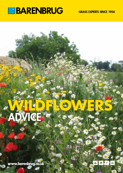 Wildflowers Brochure