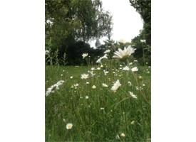 Wildflower Mats