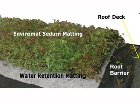 Sedum Green Roofing