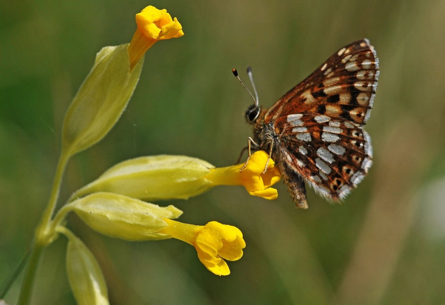 ​Viridor launches project to help save endangered wild flowers