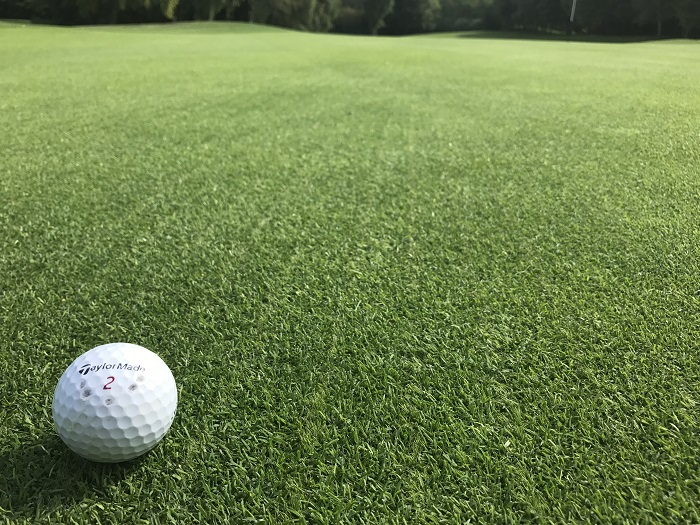 ALL BENT is number one bentgrass mixture for golf greens