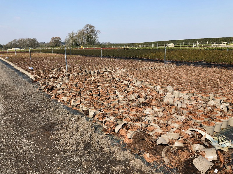 Thieves destroy thousands of plants at commercial nursery Johnsons of Whixley