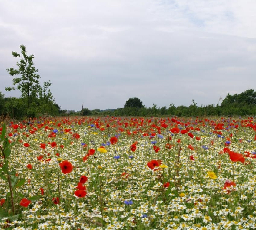 LI to discover the state of UK's landscape industry