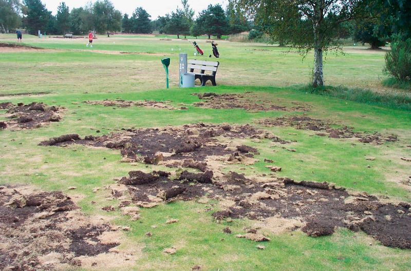 Bayer launch first biological control of leatherjackets and chafer grubs