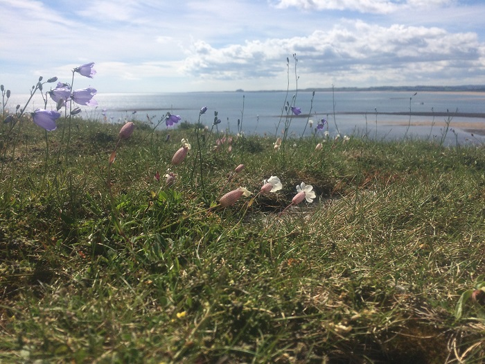 Barenbrug refreshes range of wildflowers