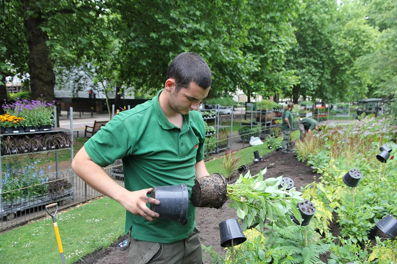 Capel Manor College wins key horticulture apprenticeship contract