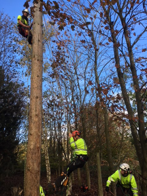 Gristwood and Toms champions internationally agreed standard in arboriculture