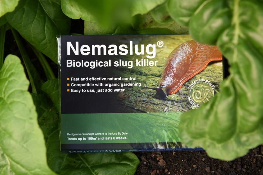 Protect man's best friend from Lungworm