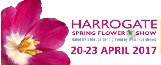 From New Zealand with love – European exclusive blossoms at Harrogate Spring Flower Show