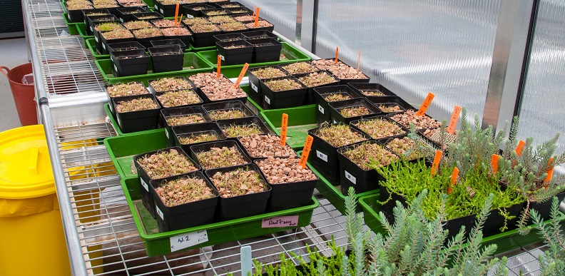 Beneficial micro-organisms thrive on green roofs.
