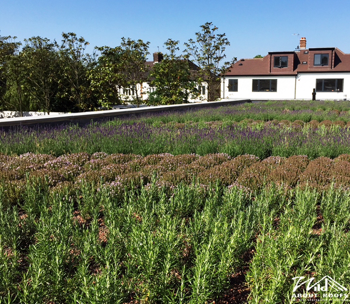 Green roof makes a splash in Cannon Hill