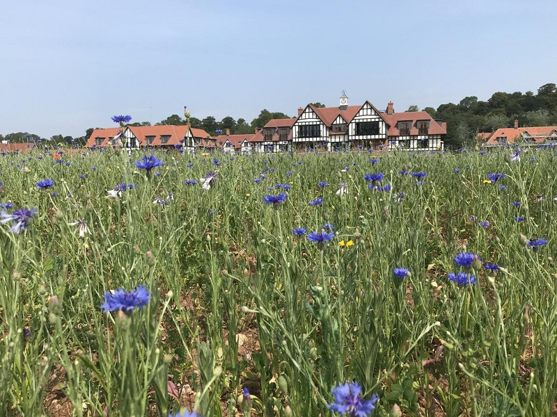 Bespoke DLF Wildflower mix brightens the landscape
