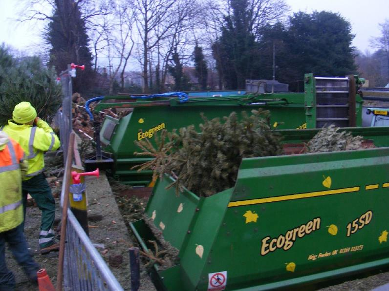 Annual Christmas tree collection raises thousands