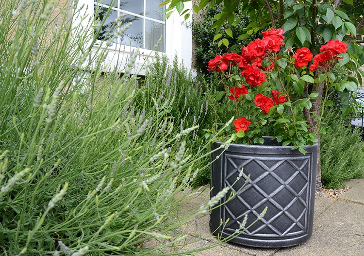 Planters create sensational focal points