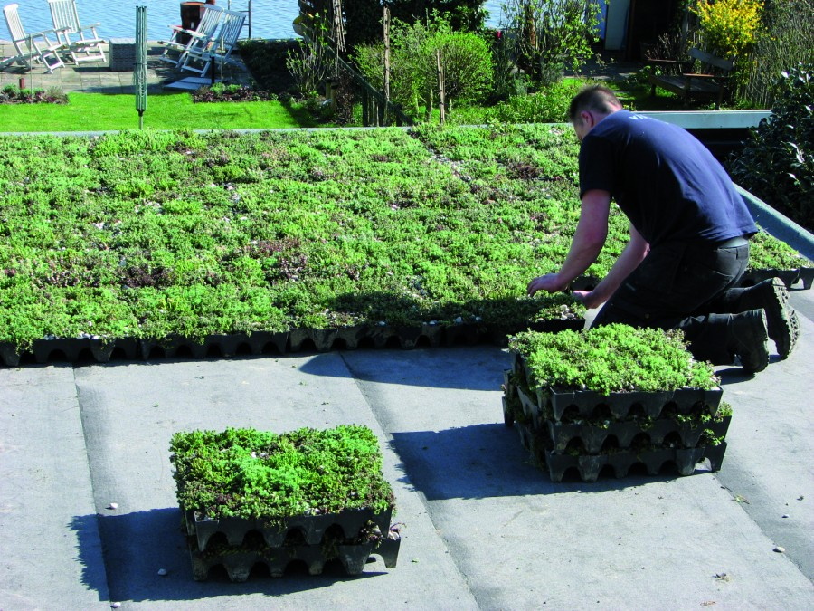 MobiRoof: The simplest of green roofs
