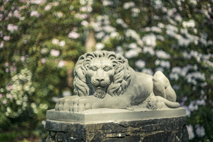 Replica sculpted lions in place ready for renaming