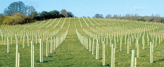 Tree-mendous order for Lincolnshire Tree Nursery