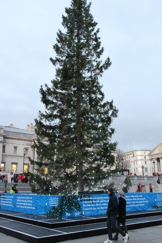PEFC helps London light up for Christmas