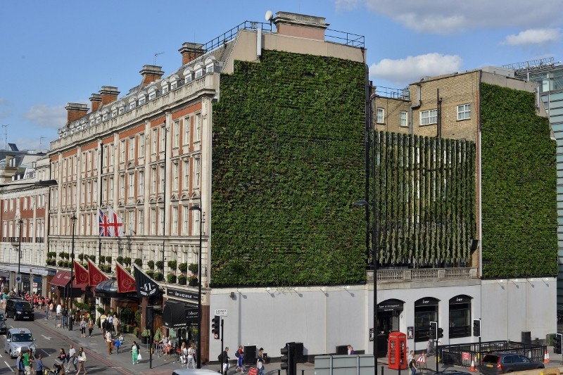 Treebox living wall makes London hotel a beacon of biodiversity