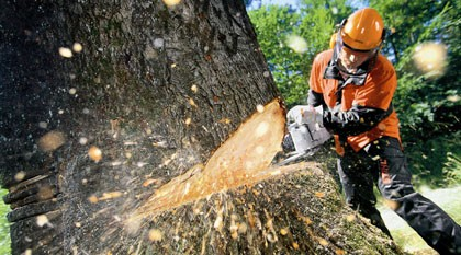 Lantra Awards leads the way in Forestry and Arboriculture